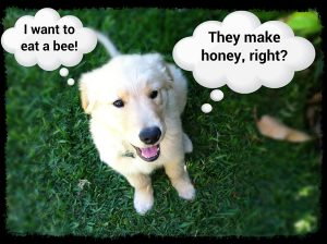 Puppy with thought bubbles: I want to eat a bee! They make honey, right?