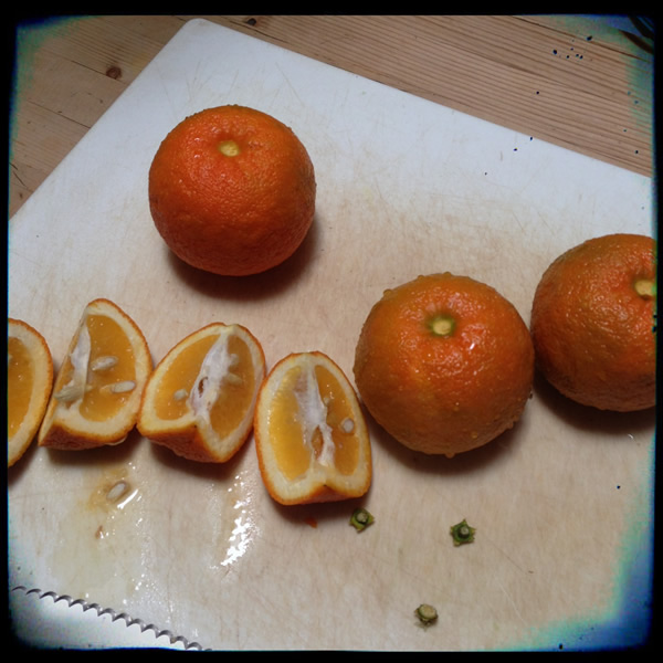 Cutting Seville oranges for marmalade | Recipe Renovator