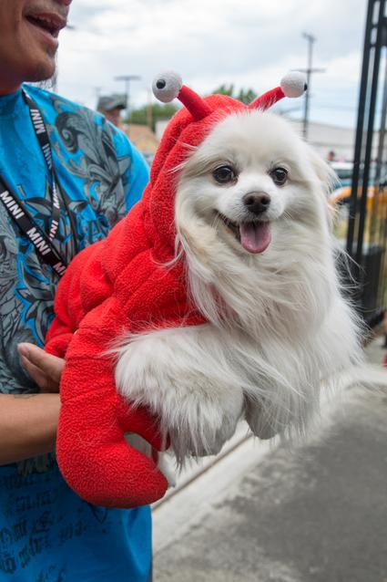2014 MTTS Pets- Day 1 (07/2014)