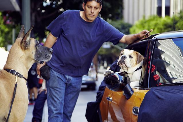 The Bulldog is back. (10/2013)