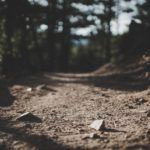 The Path to Peaceful Leadership
