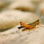 I Could Hear the Crickets Chirping: Three Tips for Dealing With Awkward Silence in a Group