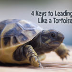 4 Keys to Lead Your Ministry Like a Tortoise, not a Hare