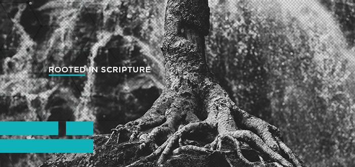 Rooted in Scripture LifeWay Students