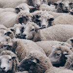 Caring for the 5 kinds of sheep in your group
