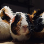 Hamsters, Hope, and Why Your Group Should Fight for Obedience