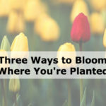 Three Ways to Bloom Where You're Planted