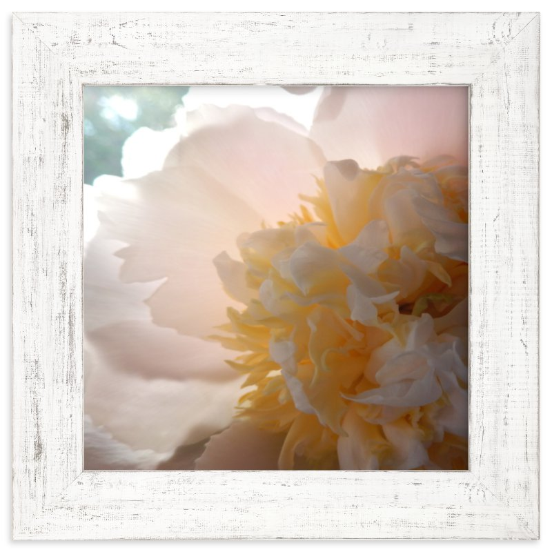 """""""Morning Peony"""" - Limited Edition Art Print by Jan Kessel in beautiful frame options and a variety of sizes."""