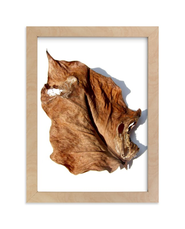 """""""Brown Leaf Study #1"""" - Limited Edition Art Print by Jonathan Brooks in beautiful frame options and a variety of sizes."""