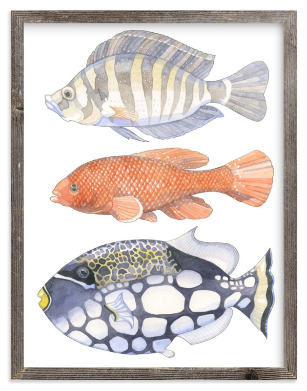 Three Fish Wall Art Prints by Natalie Groves | Minted