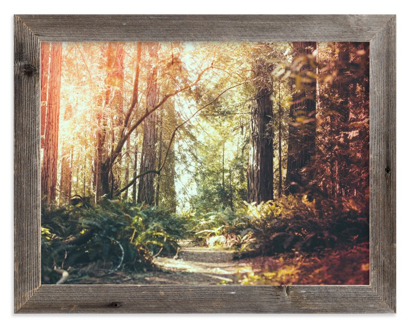 """""""Redwoods Path"""" - Limited Edition Art Print by Elena Kulikova in beautiful frame options and a variety of sizes."""
