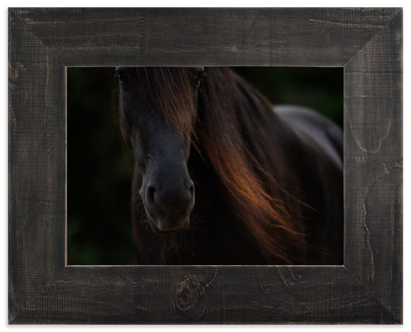 """Rocinante"" - Limited Edition Art Print by Amy Carroll in beautiful frame options and a variety of sizes."