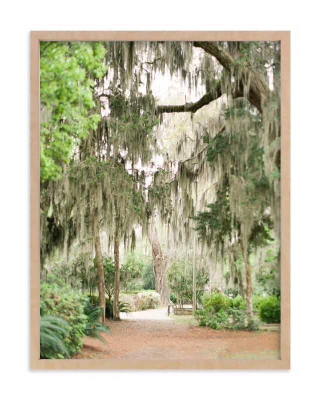 """""""Spanish Moss"""" - Limited Edition Art Print by Lindsay Madden in beautiful frame options and a variety of sizes."""