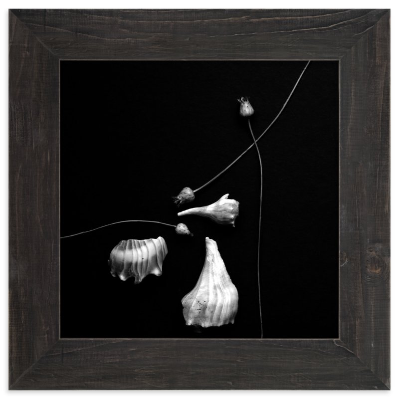 """Thistle and Shells No. 5"" - Limited Edition Art Print by Tracie Christine in beautiful frame options and a variety of sizes."