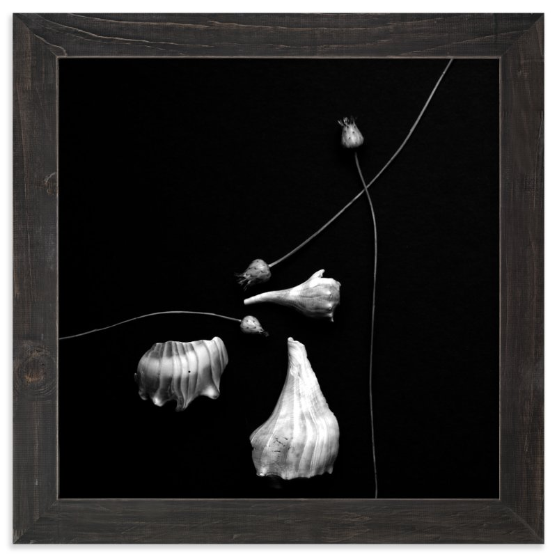 """""""Thistle and Shells No. 5"""" - Limited Edition Art Print by Tracie Christine in beautiful frame options and a variety of sizes."""