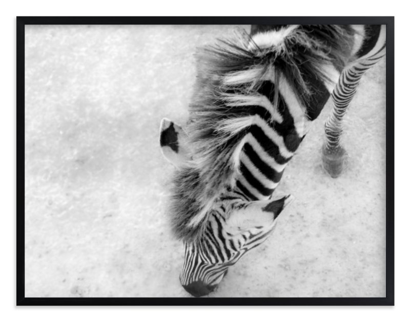 """Zebra from Above"" - Limited Edition Art Print by Mary Ann Glynn-Tusa in beautiful frame options and a variety of sizes."
