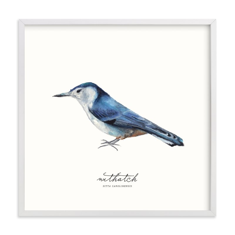 """Nuthatch"" - Limited Edition Art Print by Olivia Kanaley in beautiful frame options and a variety of sizes."