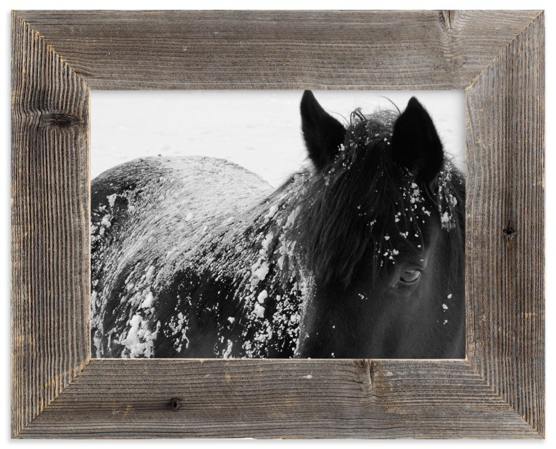 """A Shadow In A Storm"" - Limited Edition Art Print by Leslie Le Coq in beautiful frame options and a variety of sizes."