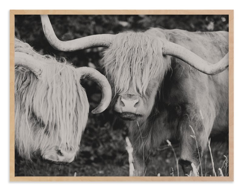"""Highland Cows"" - Limited Edition Art Print by Amy Carroll in beautiful frame options and a variety of sizes."