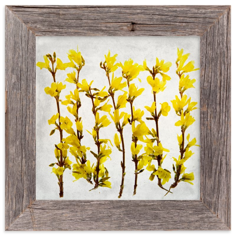 """Forsythia"" - Limited Edition Art Print by Qing Ji in beautiful frame options and a variety of sizes."