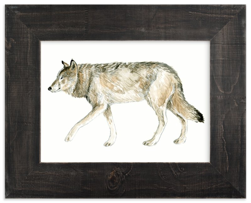 """Wolf Watercolour Study"" - Limited Edition Art Print by Eve Schultz in beautiful frame options and a variety of sizes."