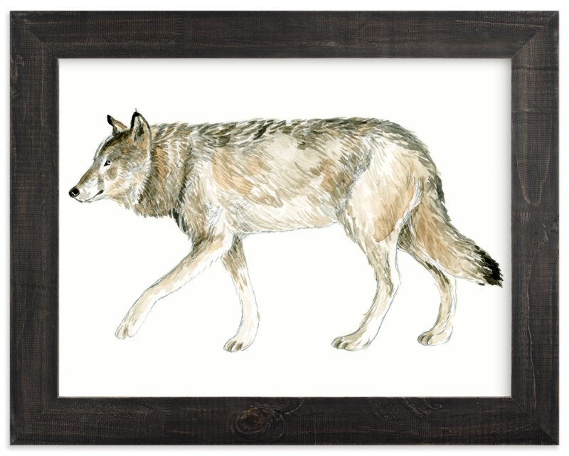 """""""Wolf Watercolour Study"""" - Limited Edition Art Print by Eve Schultz in beautiful frame options and a variety of sizes."""