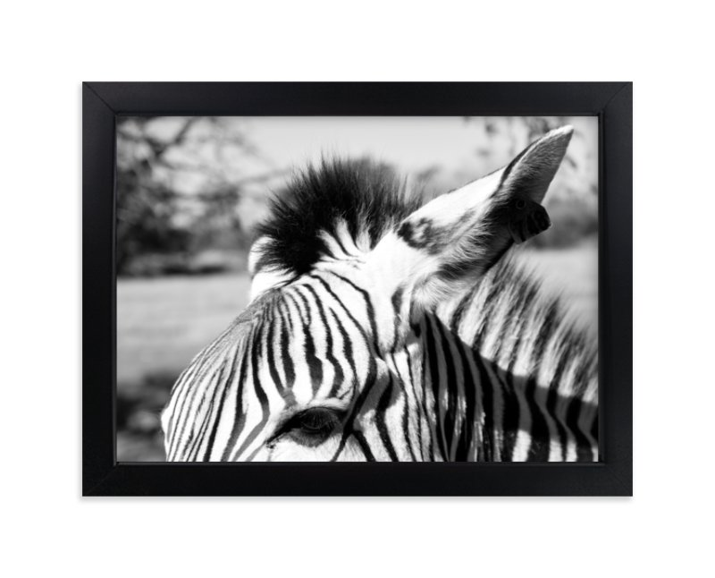 """""""Zebra"""" - Limited Edition Art Print by Basil Design Studio in beautiful frame options and a variety of sizes."""