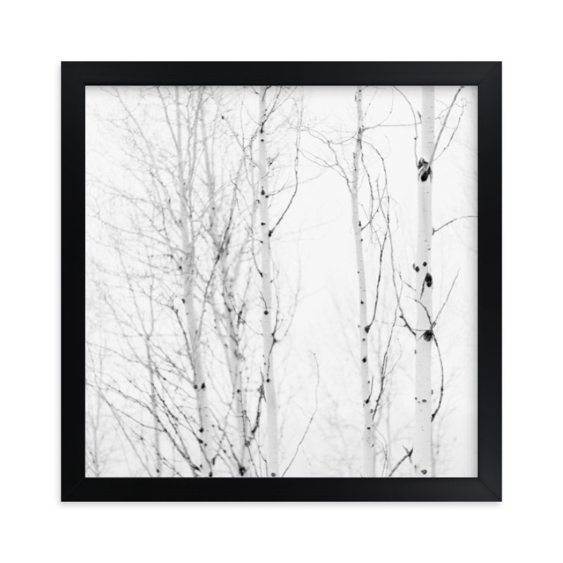 """""""White Aspens"""" - Limited Edition Art Print by Jessica C. Nugent in beautiful frame options and a variety of sizes."""