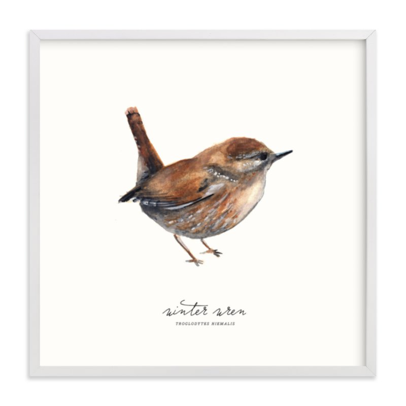 """""""Winter Wren"""" - Limited Edition Art Print by Olivia Kanaley in beautiful frame options and a variety of sizes."""