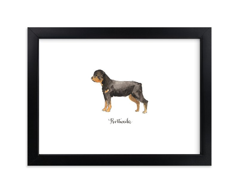 """""""Rottweiler"""" - Limited Edition Art Print by Megan Kelso in beautiful frame options and a variety of sizes."""