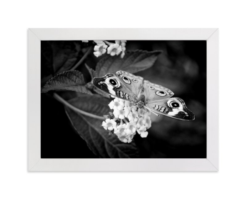 """""""Common Buckeye"""" - Art Print by Donna Rosser in beautiful frame options and a variety of sizes."""