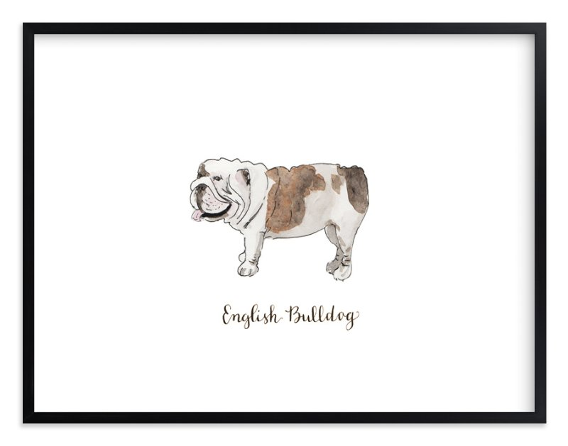 """""""English Bulldog"""" - Art Print by Megan Kelso in beautiful frame options and a variety of sizes."""
