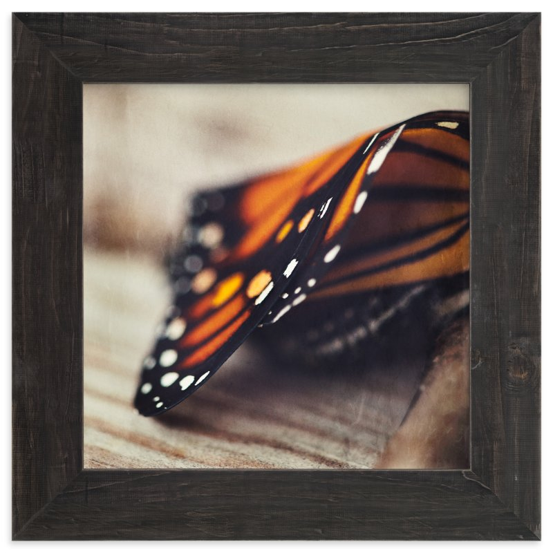 """""""Monarch Study #2"""" - Art Print by Stacy Kron in beautiful frame options and a variety of sizes."""