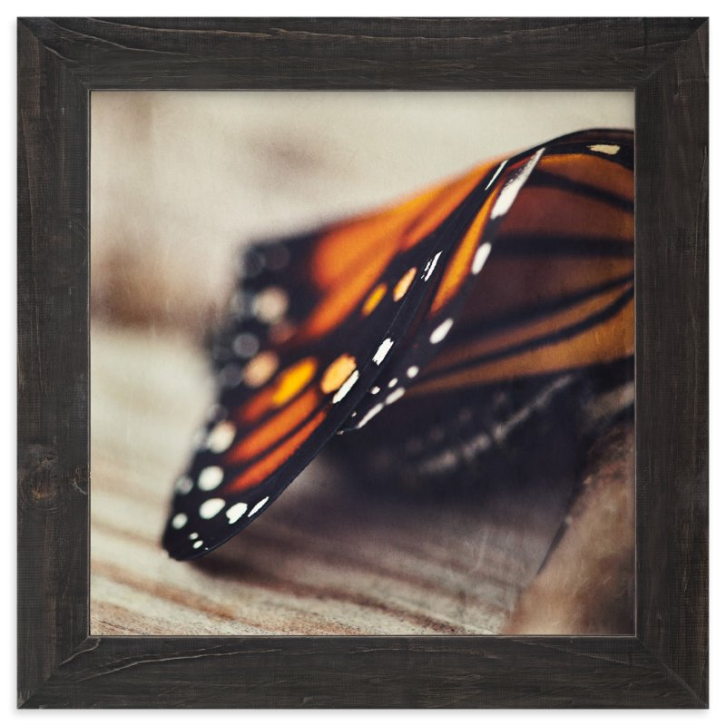 """Monarch Study #2"" - Art Print by Stacy Kron in beautiful frame options and a variety of sizes."