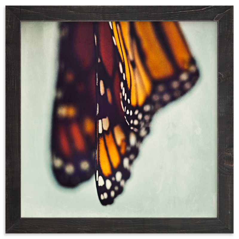 """""""Monarch Study #5"""" - Art Print by Stacy Kron in beautiful frame options and a variety of sizes."""