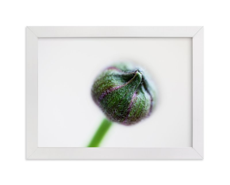 """Budding Ranunculus 1"" - Art Print by Jessica Marchetti in beautiful frame options and a variety of sizes."