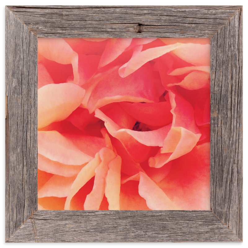 """sherbet rose 2"" - Art Print by Niki Digrigorio in beautiful frame options and a variety of sizes."