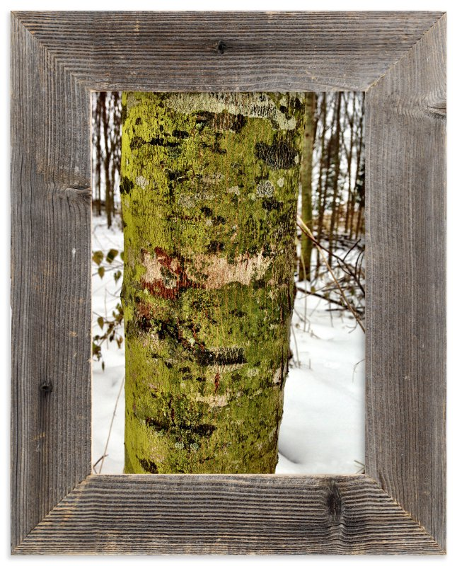 """Winter Green"" - Art Print by Misty Hughes in beautiful frame options and a variety of sizes."