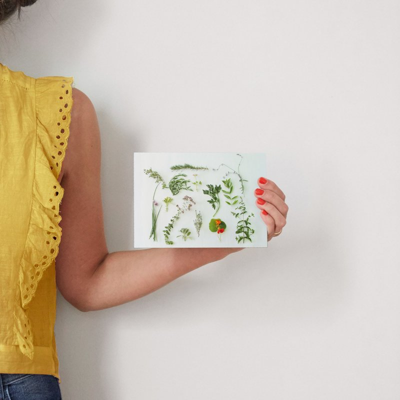 Modern Herb Garden Wall Art Prints By Kate Wong | Minted