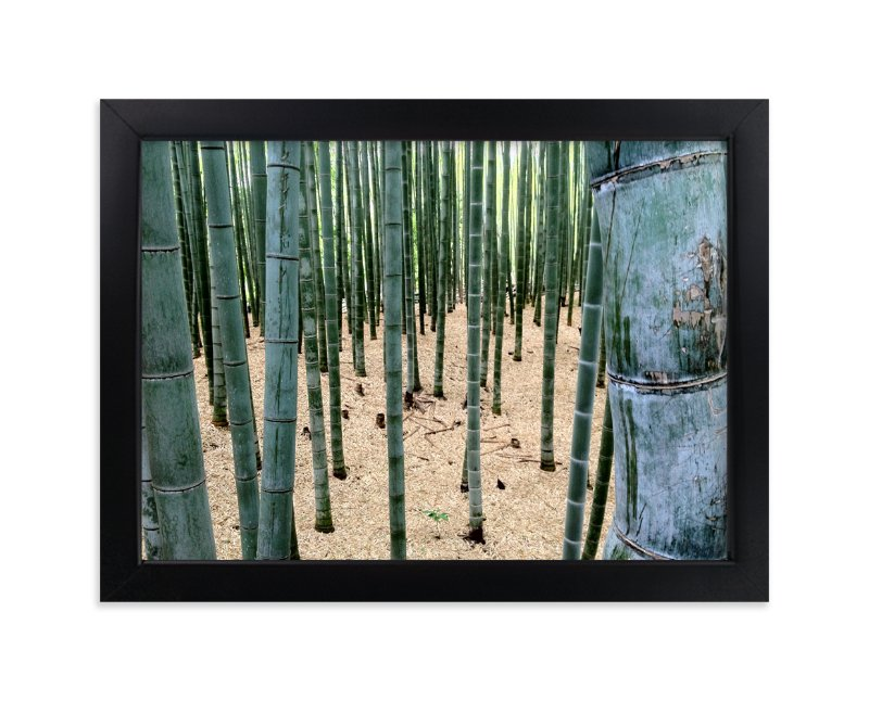 """Bamboo Garden"" - Art Print by nathan glynn in beautiful frame options and a variety of sizes."