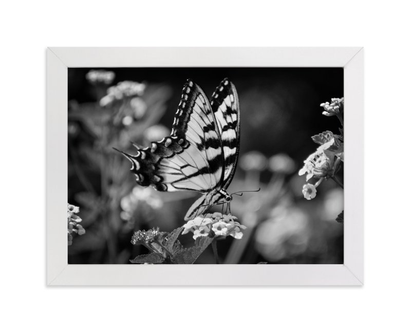 """""""Tiger Swallowtail"""" - Art Print by Donna Rosser in beautiful frame options and a variety of sizes."""