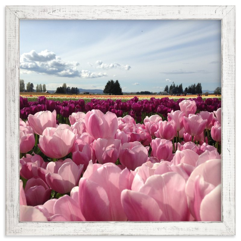 """""""Pink Fields of Light"""" - Art Print by Jan Kessel in beautiful frame options and a variety of sizes."""