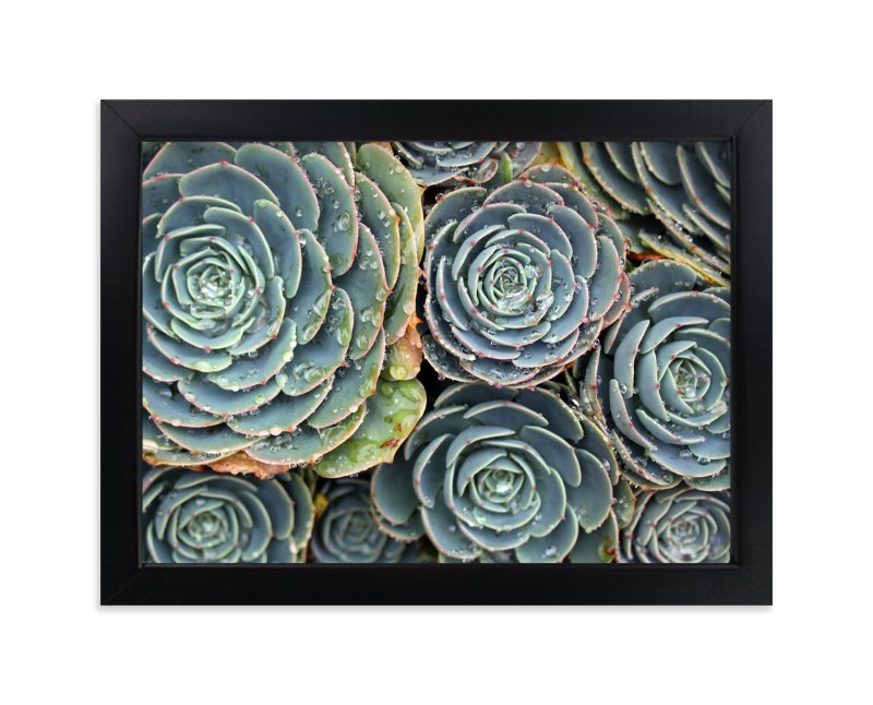 """Raindrops on Succulents"" - Art Print by Becky Nimoy in beautiful frame options and a variety of sizes."
