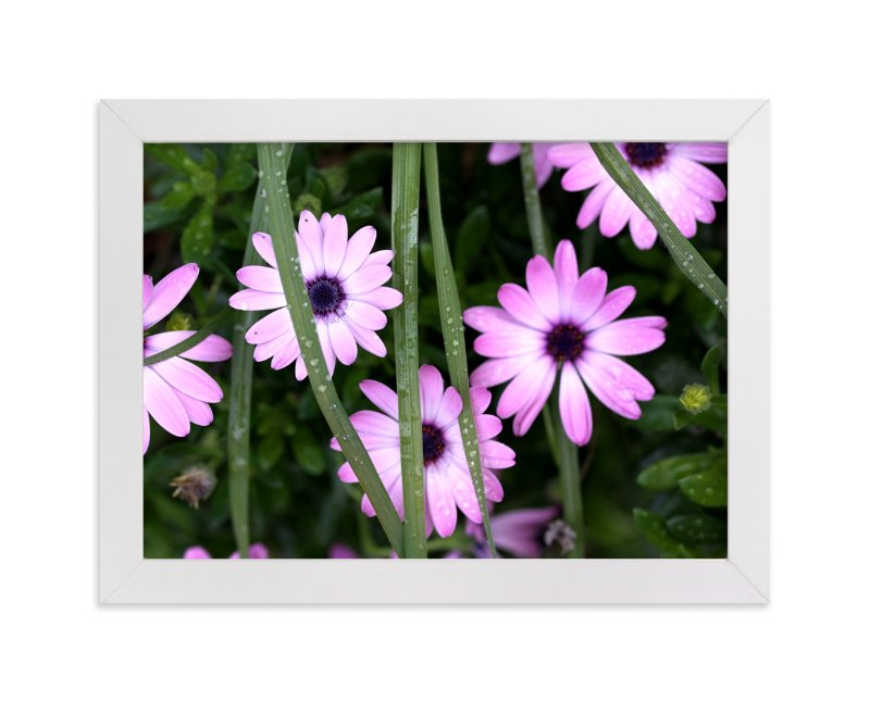 """""""Dew Drops on Purple African Daisies"""" - Art Print by Becky Nimoy in beautiful frame options and a variety of sizes."""