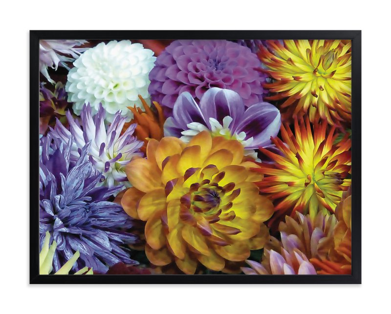 """Dahlia Mix"" - Art Print by Mazing Designs in beautiful frame options and a variety of sizes."