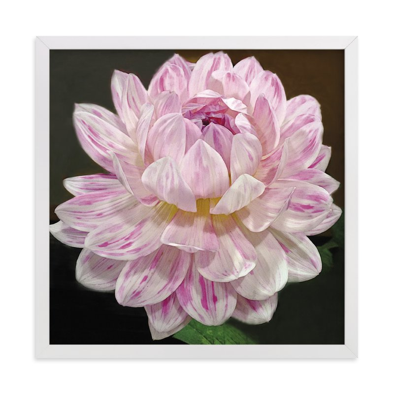 """""""Pink White Waterlily Dahlia"""" - Art Print by Mazing Designs in beautiful frame options and a variety of sizes."""
