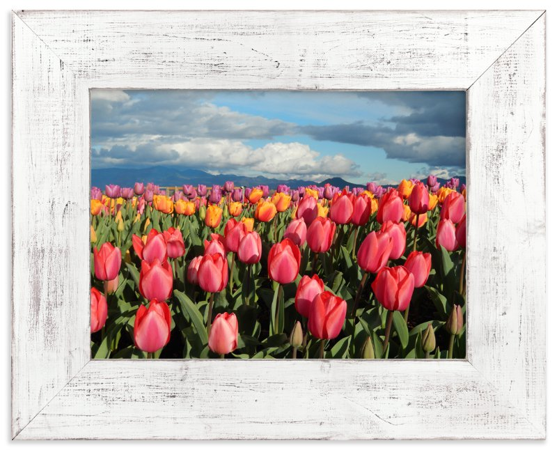 """""""Tulip Gardens"""" - Art Print by Jan Kessel in beautiful frame options and a variety of sizes."""