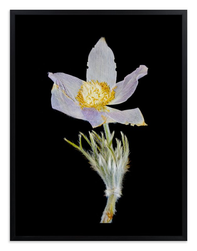 """""""Member 3"""" - Art Print by Shannon in beautiful frame options and a variety of sizes."""