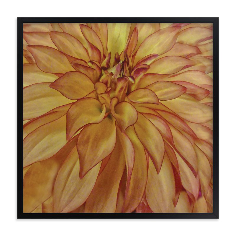 """Orange Tip Dahlia"" - Art Print by Mazing Designs in beautiful frame options and a variety of sizes."