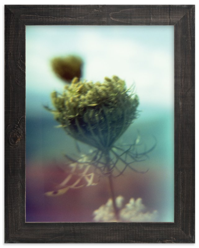 """Skyline Drive Flora Yellow"" - Art Print by Meghan Quinn in beautiful frame options and a variety of sizes."